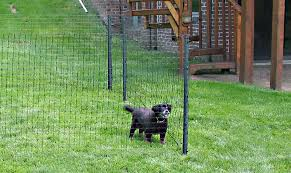 temporary garden fencing dogs small dog fence dog fencing options