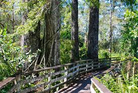 Natural attractions in florida florida hikes