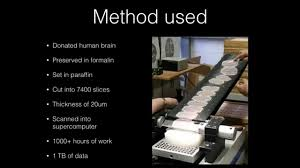 Human Brain Mapping Brain Mapping Technology Youtube