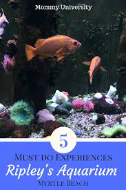 5 must do experiences at ripley u0027s aquarium of myrtle beach mommy