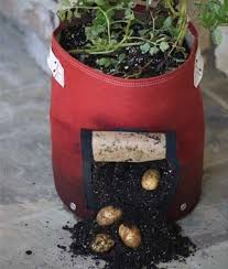 Patio Potato Planters Potato Planter Burpee