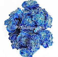 blue carnations tinted carnations for s day