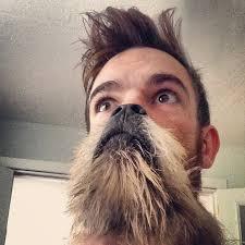 Cat Beard Meme - dog beards the canine equivalent of the cat beards meme