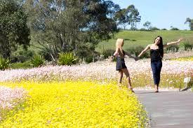 The Australian Botanic Garden Greg Bourke On The Australian Botanic Garden Mount