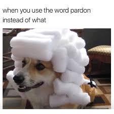 What R Memes - dank memes pardon via r memes http ift tt 2xidasw