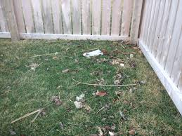 winter debris on your lawn needs cleaned up jeremy biros