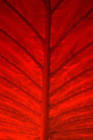 Red Colour Shades The Color Thesaurus Wordpress Dark Red And Red Color