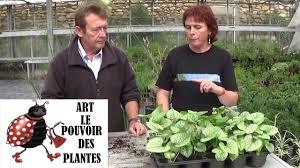 chaine tv de gardening how to grow and split brunnera