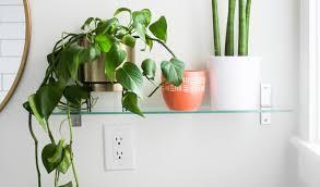 Indoor Plants Low Light Hgtv by Best Bedroom Plants Living Room Chair For Sale