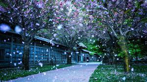 beautiful plants flower rose parks smile beauty fantasy plants petals beautiful