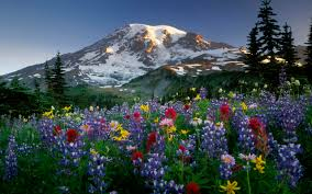 Mountains Mountains And Flowers Free Desktop Wallpapers For Widescreen Hd