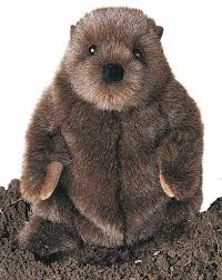 amazon com plush chuckwood groundhog 11