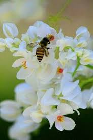 36 best beautiful bee hives images on pinterest bee hives honey