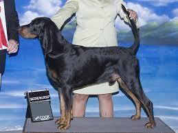 belgian sheepdog hound best joggers dog spotters