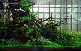 Plants For Aquascaping Basic Forms Aqua Rebell