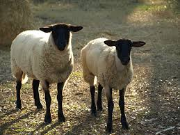 lamb about cat u0027s kitchen
