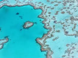 Great Barrier Reef Map Great Barrier Reef What Else Is There To Do Other Than Snorkeling