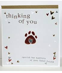 thinking of you cards pet sympathy cards molly mae thinking of you cards for dogs cats