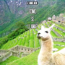 Llama Meme - 8tracks radio como se llama fanmix meme 15 songs free and