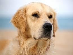 poema canino