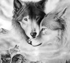 drawn wolf love pencil and in color drawn wolf love