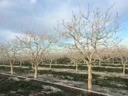 warm to grow tree crops farmers work to temper climate change