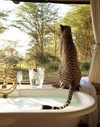 Safari Bathroom Ideas 48 Best African Bathroom Ideas Images On Pinterest Bathroom