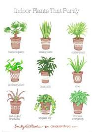Plants For Office The Beginner U0027s Guide To Trendy Indoor Plants Indoor Plants And