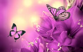 Purple Butterfly Decorations Butterfly Vector Silhouette Green Erfly Background Free Desktop