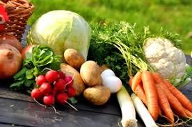 vegetable gardening for beginners u2014 expert advice organic