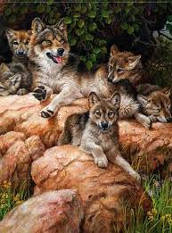 larry fanning wolf and cubs wildlife nature rocks pups foxes