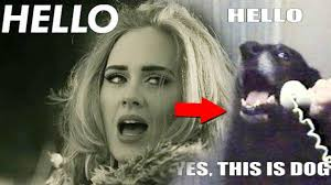 Adele Meme - top 10 funny adele hello memes pictures youtube