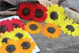pressed flowers 2017 new sunflower dried pressed flower manufacturers in china for