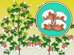 White Flag With Green Leaves How To Identify Farm Crops 10 Steps With Pictures Wikihow