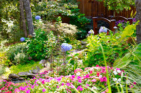 native plants landscaping low maintenance landscaping plants native tulsa fall gardening