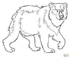brown bear coloring pages ngbasic com