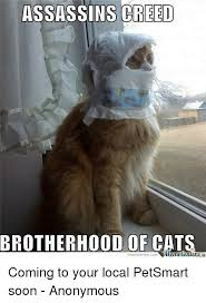 Soon Cat Meme - 25 best memes about grumpy cat grumpy cat memes