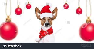 christmas santa claus jack russell dog stock photo 738794107