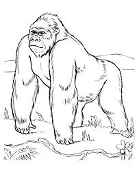 coloring page of gorilla on gorilla coloring page coloring pages for children
