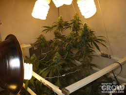 cheap grow lights for weed compact fluorescent cfl grow lights