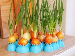 grow onions in containers youtube
