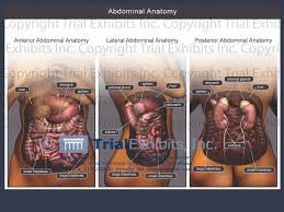 Female Abdominal Anatomy Pictures Tag Abdominal Muscle Anatomy Female Archives Human Anatomy Body