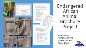 brochure rubric template endangered animal brochure research project the white giraffe by