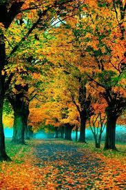 25 autumn pictures ideas fall season autumn