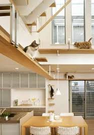 pet friendly house plans pet friendly architecture the plus nyan cat house