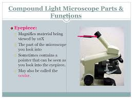 compound light microscope parts and functions microscope lab objectives identify the parts of dissecting and