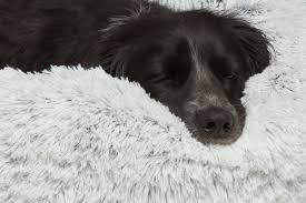 Burrowing Dog Bed Best Friends By Sheri Donut Shag Frost Bolster Dog Bed U0026 Reviews