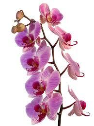 livraison de fleurs au bureau livraison de fleurs fleuriste floramicale