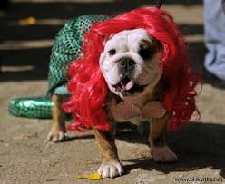 Animal Halloween Costumes 23 Halloween Dogs Images Animals Halloween