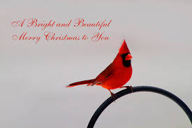 a bright and beautiful merry to you photograph by kathy